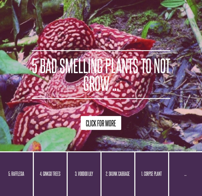 5 Bad Smelling Plants To Not Grow ... Gardening