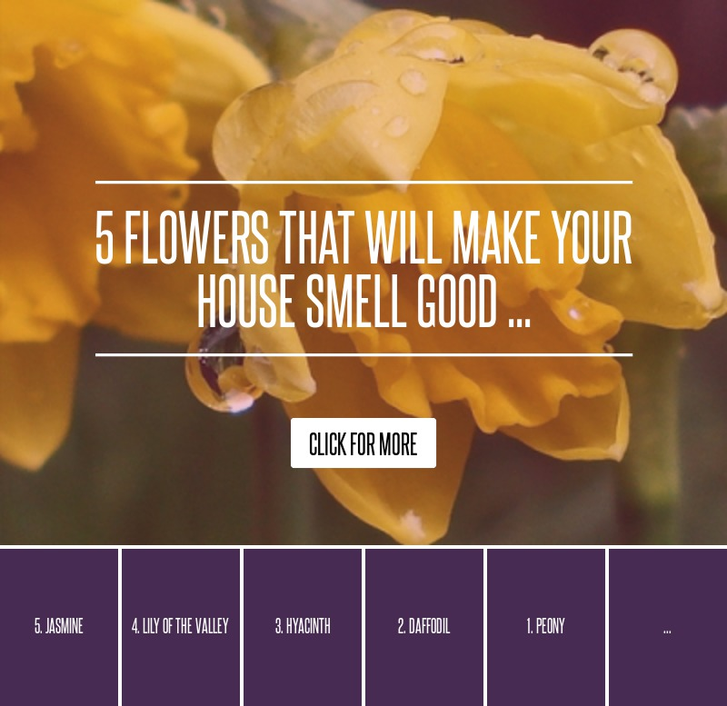 5 Flowers That Will Make Your House Smell Good Gardening