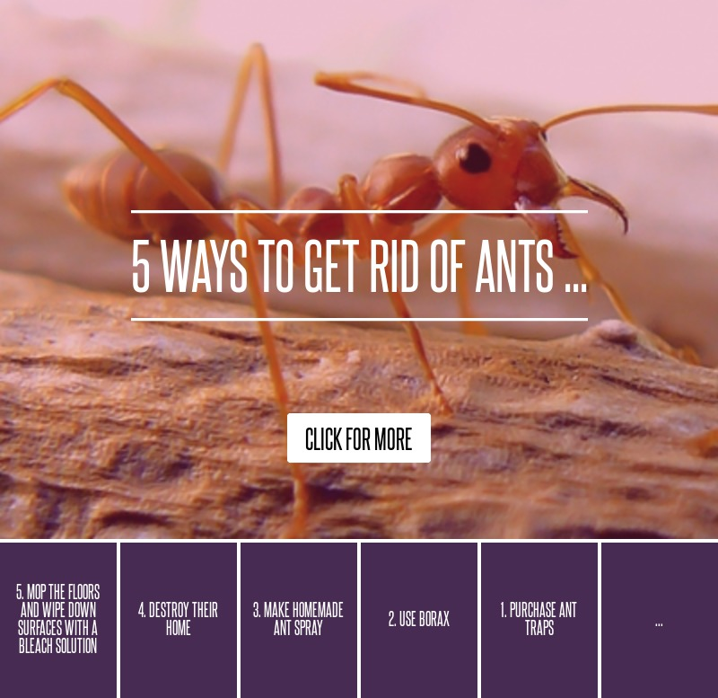 2 use borax 5 ways to get rid of ants gardening. Black Bedroom Furniture Sets. Home Design Ideas