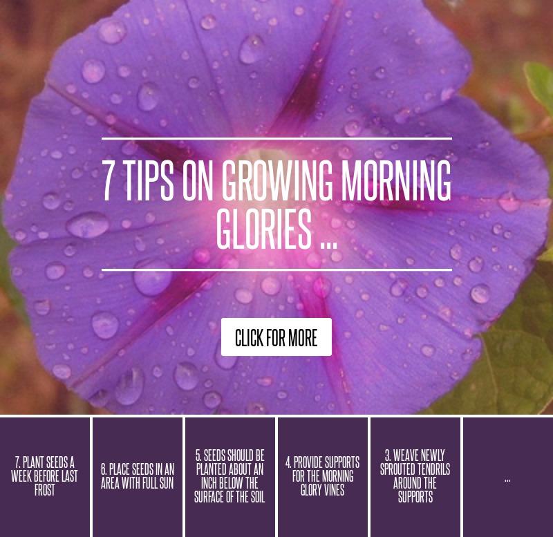 1. Fertilize Before Blooms Emerge