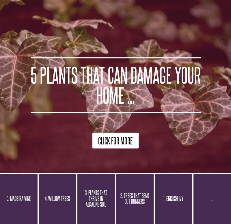 5 Plants That Can Damage Your Home Gardening