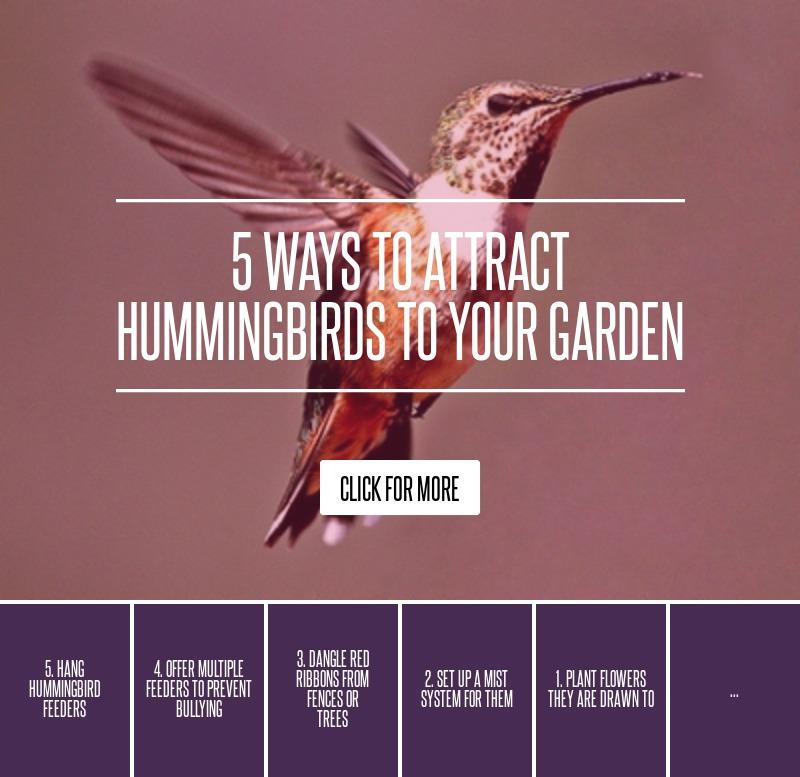 5 Ways To Attract Hummingbirds To Your Garden ... Gardening
