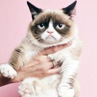 9 Famous Internet Animals We Love ...