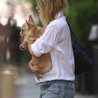 3 Photos of Ashley Carries Her Pup ...