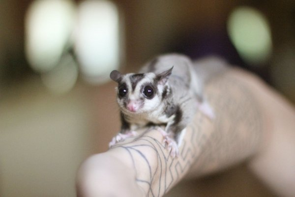 white,mammal,vertebrate,dog,close up,