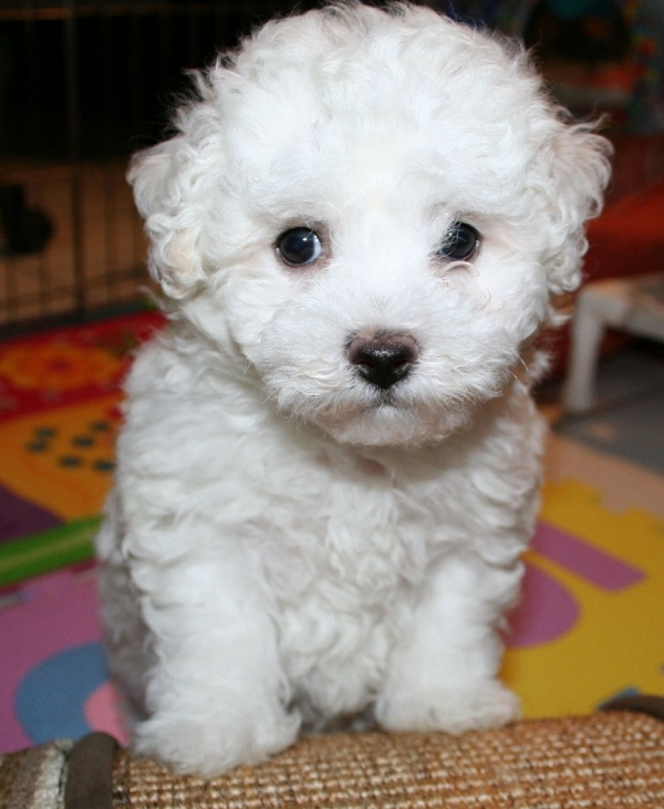 Watch How to Choose a Hypoallergenic Dog video