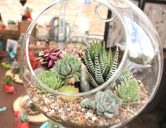 Cacti And Succulents 7 Modern Accessories To Add Any