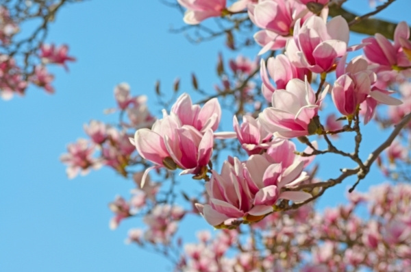 Flirting with magnolia