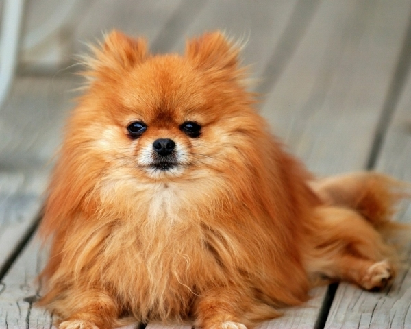 7 Cutest Dog Breeds We All Want to Own ... Lifestyle
