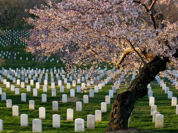 Pay Your Respects at Arlington Cemetery