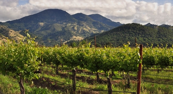 Make Your Own Wine in the Napa Valley