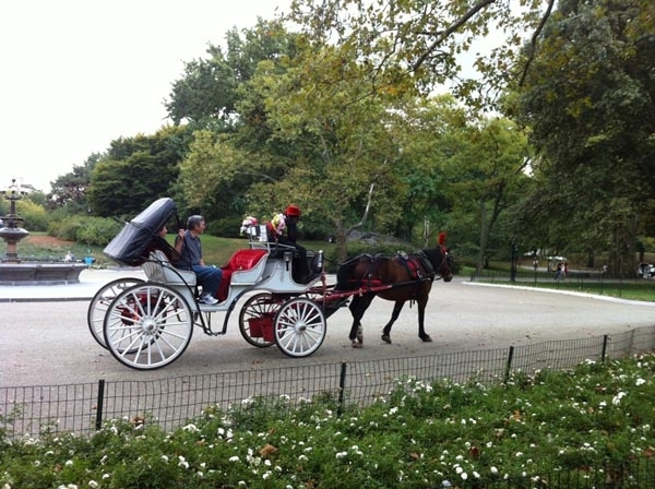 Have a Carriage Ride in Central Park