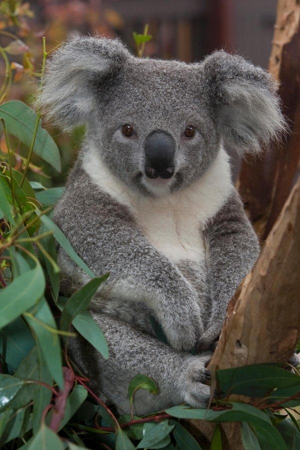 Native Australian Animals