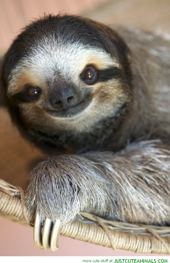 sloth,mammal,vertebrate,fauna,new world monkey,