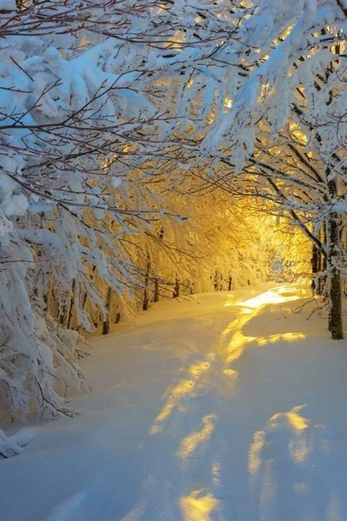 Sunrise in the Snowy Woods - 28 Snowy Scenes That Will ...