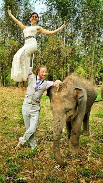 A Special Ring Bearer at Ran-Tong Elephant Rescue Center, Chiang Mai, Thailand