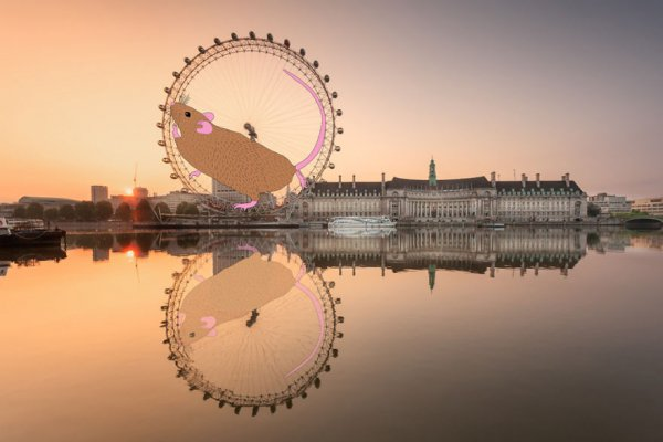 London Eye, reflection, ferris wheel, morning, evening,