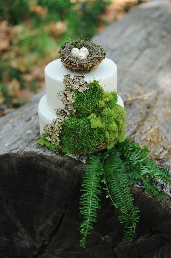 green,flora,tree,flower,plant,