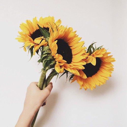 flower, sunflower, yellow, flowering plant, flower bouquet,