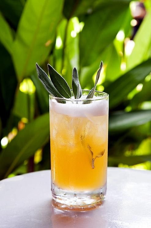 drink,cocktail,alcoholic beverage,distilled beverage,plant,