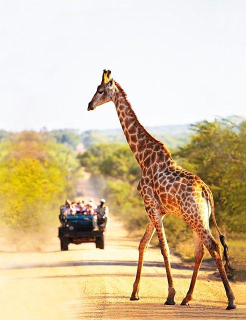 Join a Safari in Botswana
