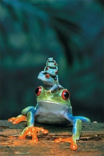 """Coming to a Circus near You - the Amazing Tree Frog Pyramid"""