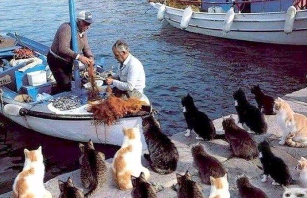 Cat Island (Tashirojima), Japan