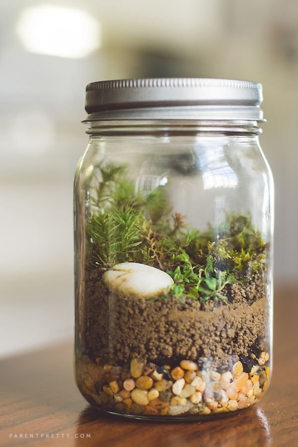 Create Really Cool Terrariums
