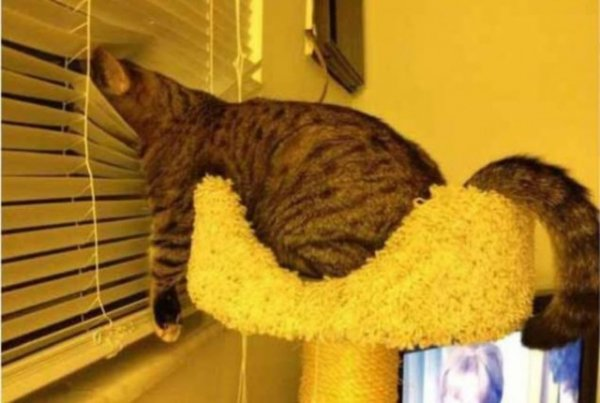 cat,mammal,cat like mammal,small to medium sized cats,
