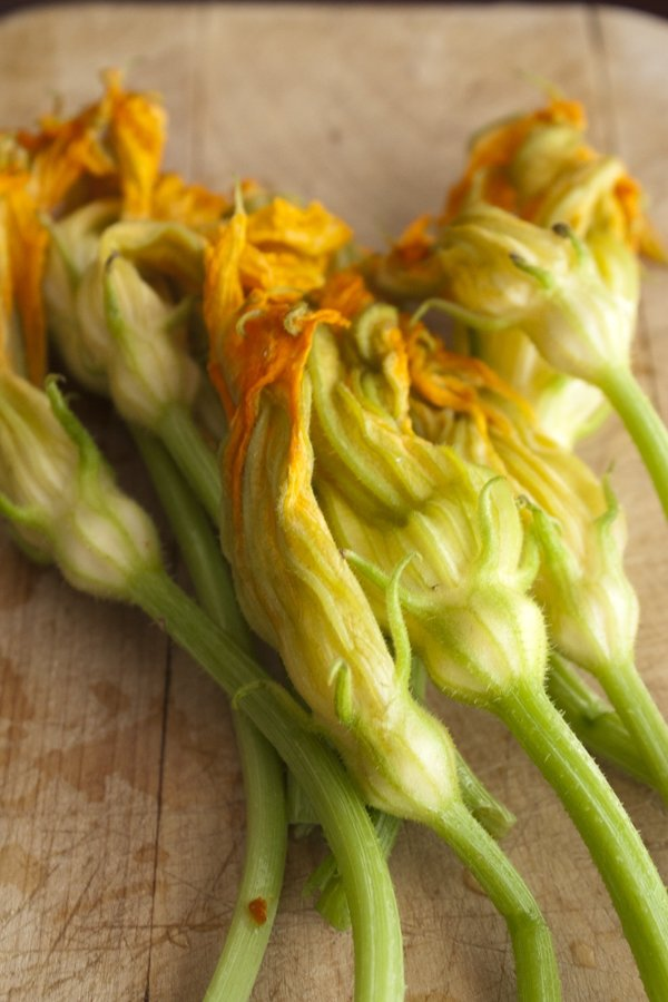 Roasted Squash Blossoms with Goat Cheese