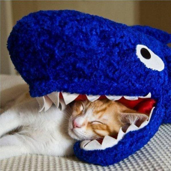 cat,kitten,textile,