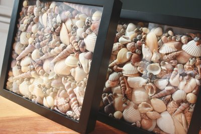 Shadow box 7 crafty things to make with sea shells - Things to do with seashells ...