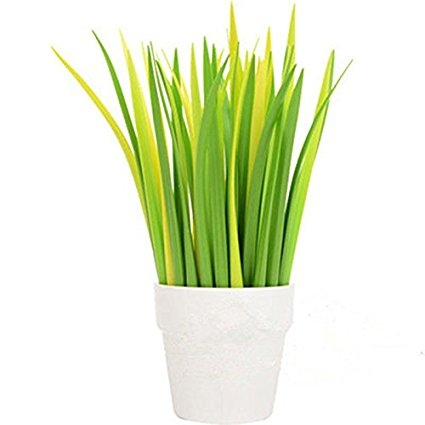 plant, grass, grass family, land plant, lighting,