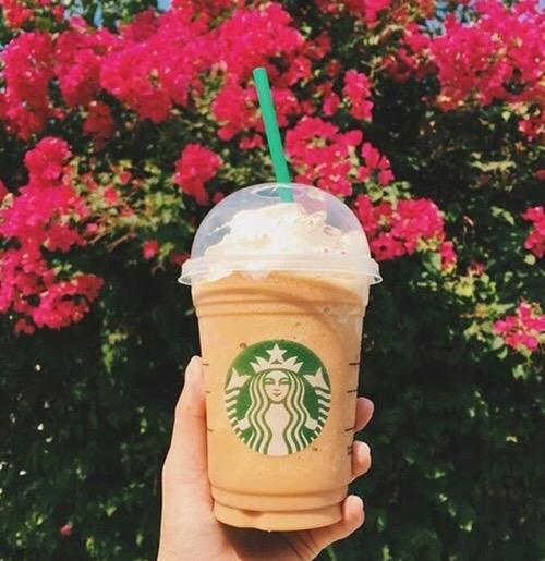 Starbucks, flower, pink, plant, garden roses,