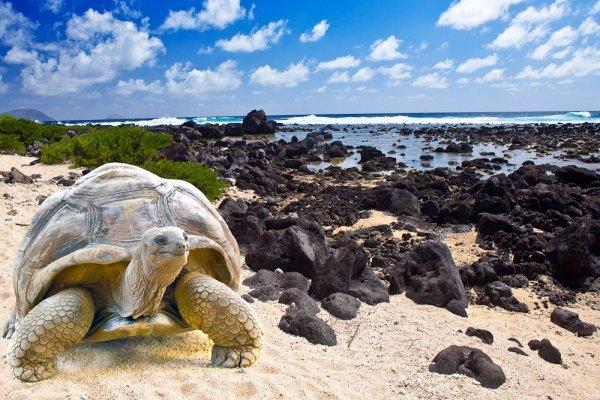Go Wildlife Watching in the Galapagos Islands in Ecuador