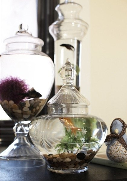 Random jars 46 inspiring fish tanks for the aquatic for Distilled water for fish tank