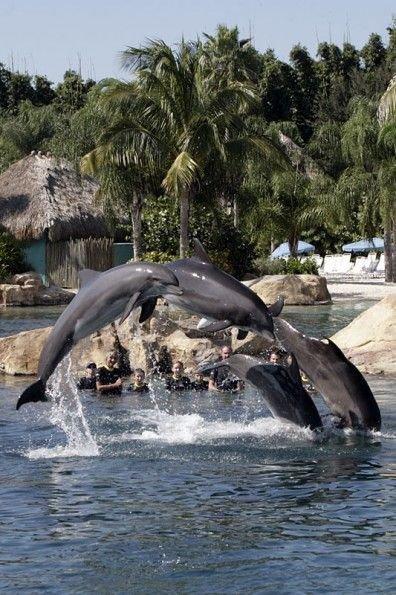 mammal,vertebrate,marine mammal,fauna,whales dolphins and porpoises,