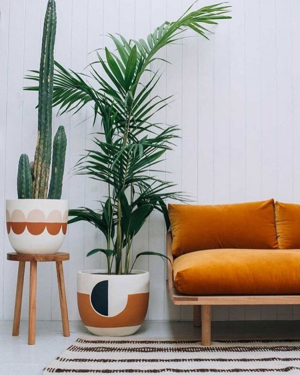 plant, arecales, grass family, interior design, furniture,