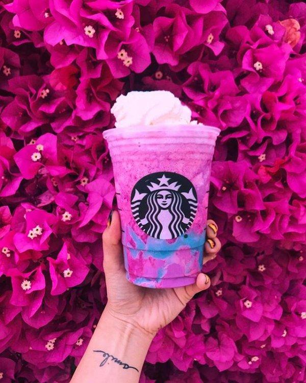 pink, purple, flower, flower bouquet, violet,