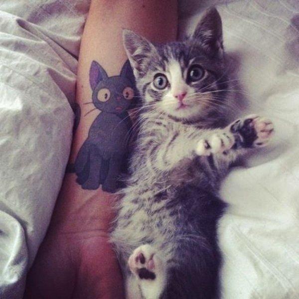cat,mammal,vertebrate,whiskers,kitten,