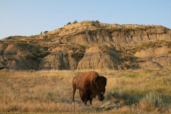 steppe, badlands, grassland, wilderness, wildlife,