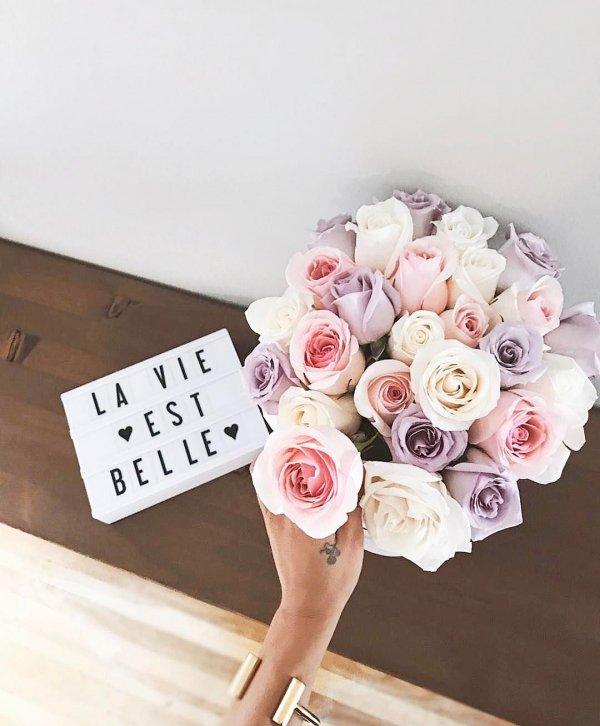 pink, flower, flower bouquet, plant, petal,