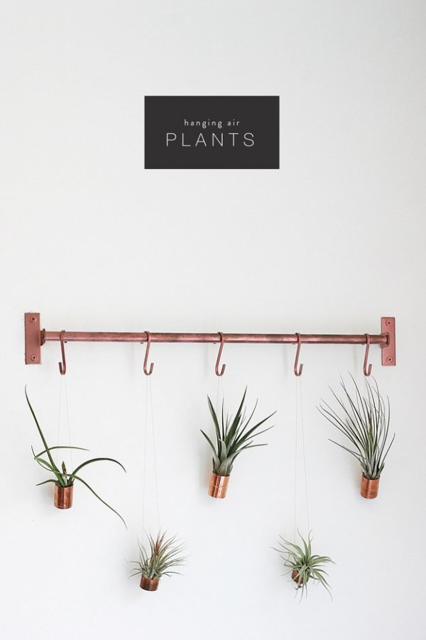 Hang Your Plants