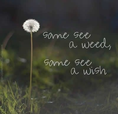 Some See a Weed...