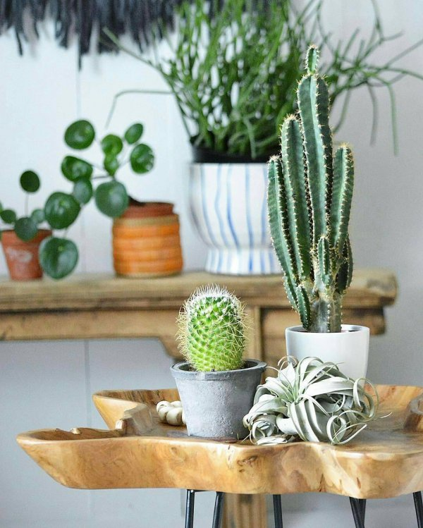 green, plant, flower arranging, land plant, floristry,
