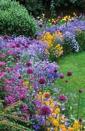fleurs de bordures vivaces