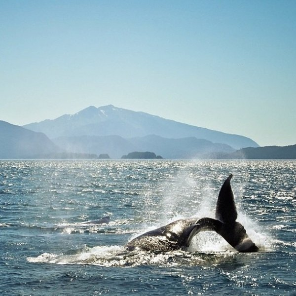 Join a Whale Watching Tour in Alaska, USA