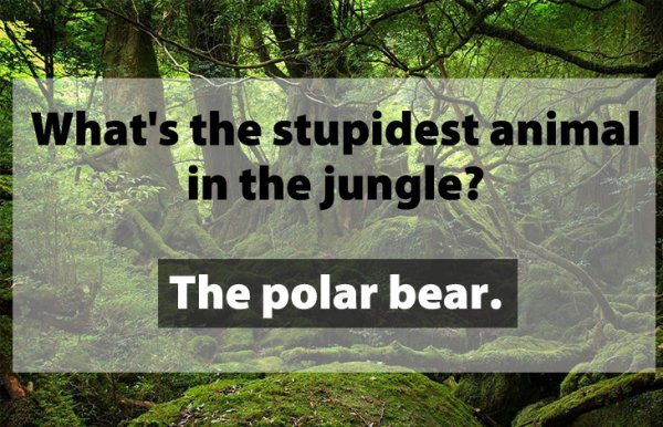 Stupidest Animal in the Jungle