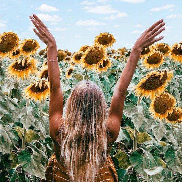sunflower, flower, flowering plant, plant, sky,