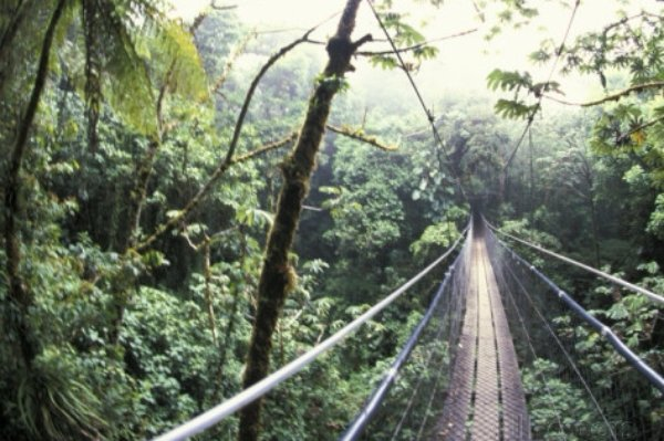 Walk in the Tree Tops of the Cloud Forest in Costa Rica